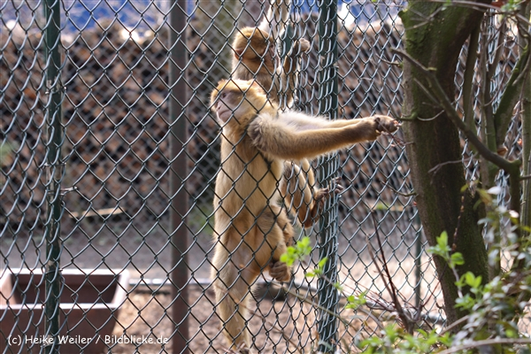 Zoo-Braunschweig-060410-IMG_9541