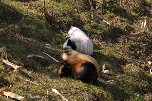 Zoo-Braunschweig-060410-IMG_9605
