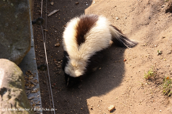 Zoo-Braunschweig-060410-IMG_9606