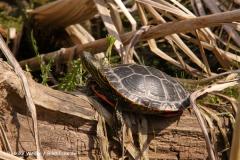 Zoo-Braunschweig-060410-IMG_9323