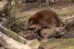 Zoo-Braunschweig-060410-IMG_9356