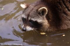 Zoo-Braunschweig-060410-IMG_9380