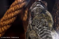 Zoo-Braunschweig-060410-IMG_9431