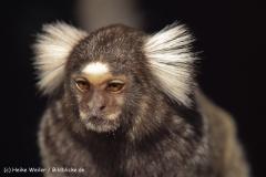 Zoo-Braunschweig-060410-IMG_9433