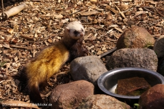 Zoo-Braunschweig-060410-IMG_9449