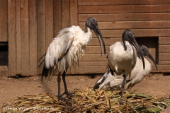 Zoo-Braunschweig-060410-IMG_9461
