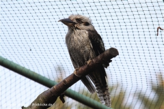 Zoo-Braunschweig-060410-IMG_9469