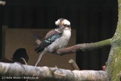 Zoo-Braunschweig-060410-IMG_9477