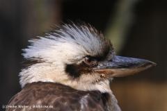 Zoo-Braunschweig-060410-IMG_9488