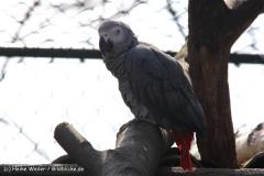Zoo-Braunschweig-060410-IMG_9523