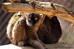 Zoo-Braunschweig-060410-IMG_9545