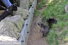 Zoo Braunschweig 080909IMG_0418