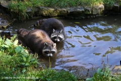 Zoo Braunschweig 080909IMG_0428