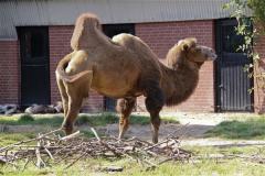 Zoo Braunschweig 080909IMG_0429