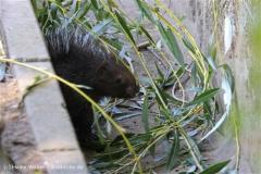 Zoo Braunschweig 080909IMG_0445