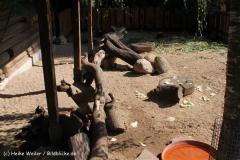 Zoo Braunschweig 080909IMG_0456