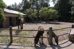 Zoo Braunschweig 080909IMG_0477