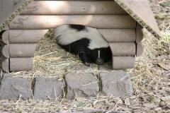 Zoo Braunschweig 080909IMG_0478