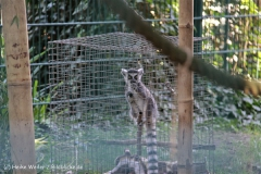Zoo Braunschweig 080909IMG_0491