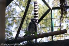 Zoo Braunschweig 080909IMG_0493