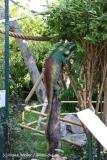 Zoo Braunschweig 080909IMG_0507