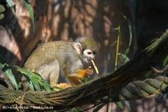 Zoo Braunschweig 080909IMG_0552