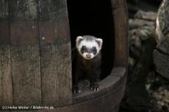 Zoo Braunschweig 080909IMG_0554
