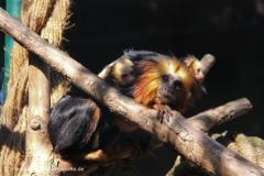 Zoo Braunschweig 080909IMG_0567