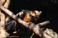 Zoo Braunschweig 080909IMG_0582