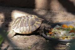 Zoo Braunschweig 080909IMG_0586