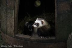 Zoo Braunschweig 080909IMG_0602