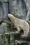 Zoo_Bremerhaven_180515_IMG_4792
