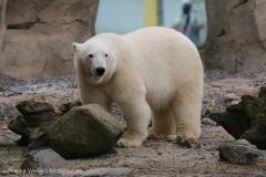 Zoo_Bremerhaven_180515_IMG_4796