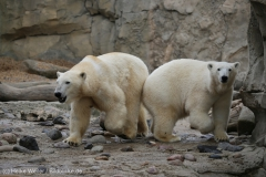 Zoo_Bremerhaven_180515_IMG_4807