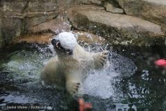 Zoo_Bremerhaven_180515_IMG_4871