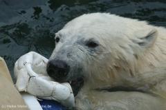 Zoo_Bremerhaven_180515_IMG_4875