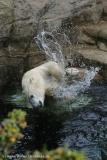 Zoo_Bremerhaven_180515_IMG_4902