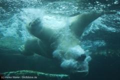 Zoo_Bremerhaven_180515_IMG_4913