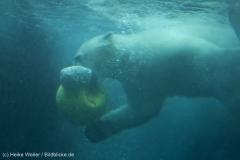 Zoo_Bremerhaven_180515_IMG_4916