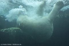 Zoo_Bremerhaven_180515_IMG_4922_9670