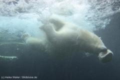 Zoo_Bremerhaven_180515_IMG_4922_9680