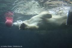 Zoo_Bremerhaven_180515_IMG_4922_9709