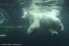 Zoo_Bremerhaven_180515_IMG_4922_9712