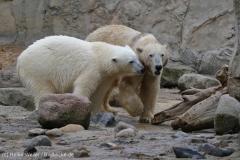 Zoo_Bremerhaven_180515_IMG_5185