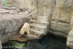 Zoo_am_Meer_Bremerhaven_190514_IMG_4904