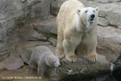 Zoo_am_Meer_Bremerhaven_190514_IMG_4906