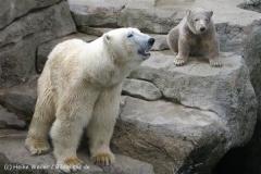 Zoo_am_Meer_Bremerhaven_190514_IMG_4910