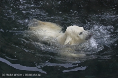 Zoo_am_Meer_Bremerhaven_190514_IMG_8391