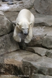 Zoo_am_Meer_Bremerhaven_190514_IMG_8491