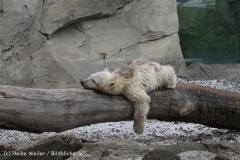 Zoo_am_Meer_Bremerhaven_190514_IMG_8507
